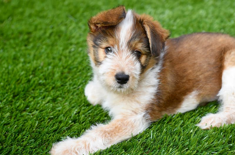 cesped artificial para perros